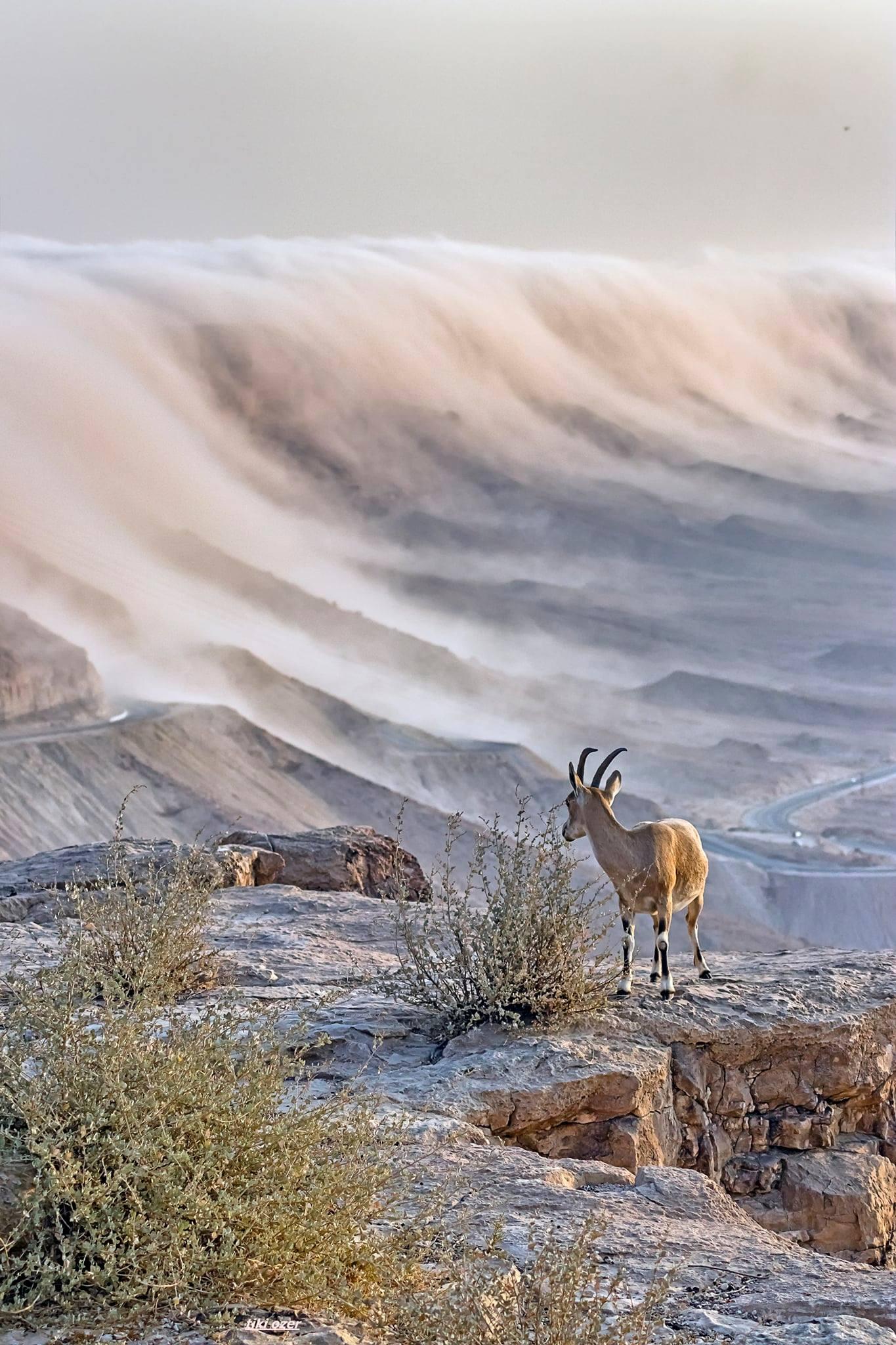 גלישת עננים במצוק מכתש רמון